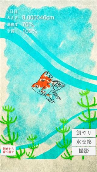 治愈系金鱼养成