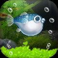我的河豚鱼水族馆